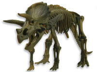 Triceratops - Model of a triceratops fossil