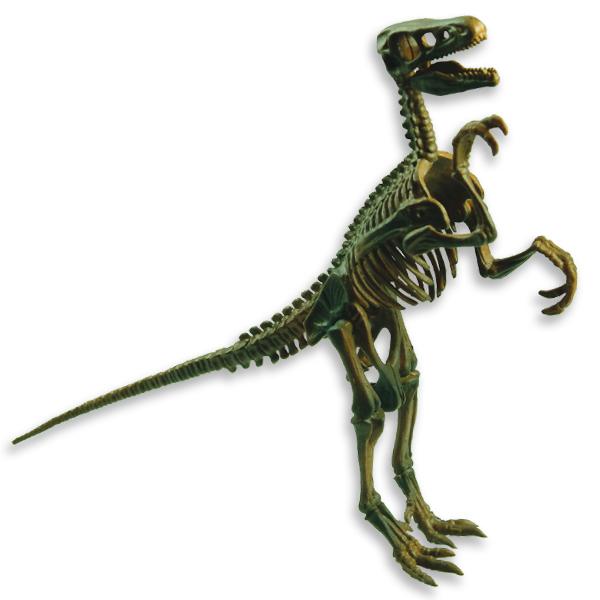 Velociraptor - Maqueta del esqueleto fósil de un velociraptor
